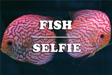 Fish (WYSIWYG)