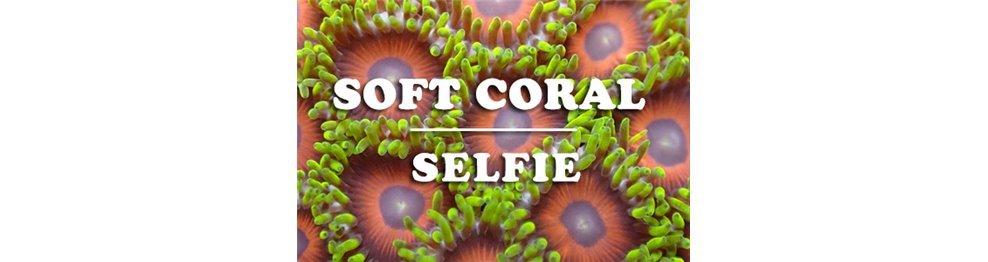 Soft Corals (WYSIWYG)
