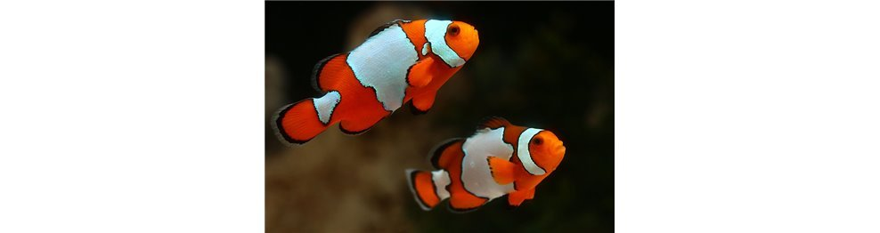 Marine Fishes (WYSIWYG)